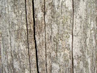 Background from very old wood