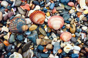 Arc of shells