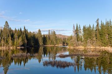 Urlaub in der Wildnis - Holidays in the wildness