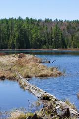Algonquin Park - Kanada - Canada - Wildnis - Wildness