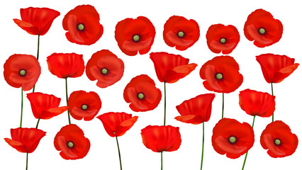 Wall Mural - Background with beautiful red poppies. Vector illustration