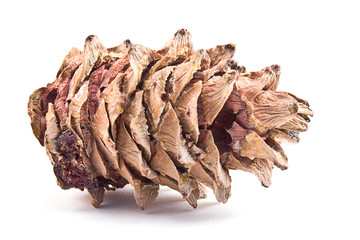 single pine cone