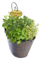 Mixed Fresh Herbs in a Metal Basket Isolated on White