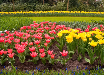 Multicolored flowerbed .