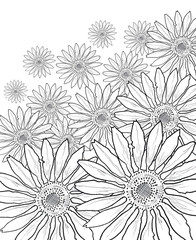 beautiful flower . drawing