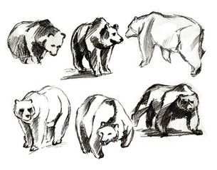 The drawn bears. Different foreshortenings