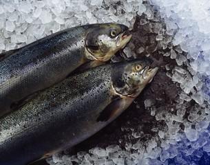 Ireland, Food, Fish, Fresh Salmon