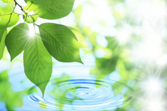 水と葉っぱ