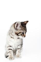 looking down kitten