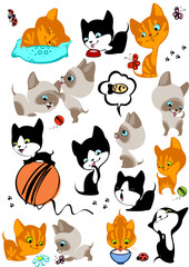 Printed kitchen splashbacks Cats complete set of different cheerful kittens.