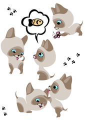 Printed kitchen splashbacks Cats The complete set of cheerful Siamese kittens 3.