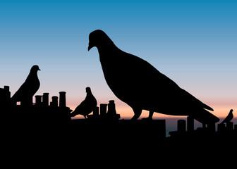 Paysage_Pigeon_Nuit