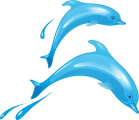 Photo sur Aluminium Dauphins Delfin 2