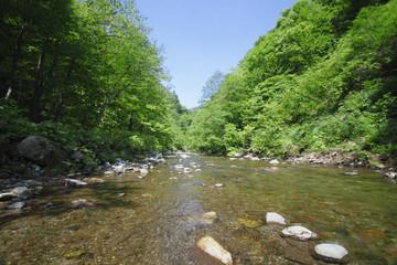 白神山地の渓流