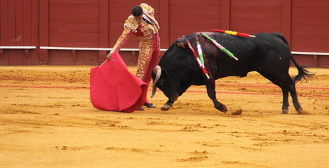 Photo sur Aluminium Corrida Matador