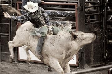 Bull rider cowboy