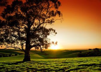 Wall Mural - Rural Sunset