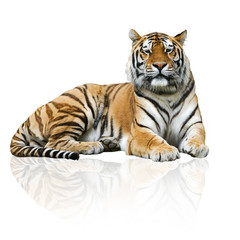 Photo sur Aluminium Tigre Tigre