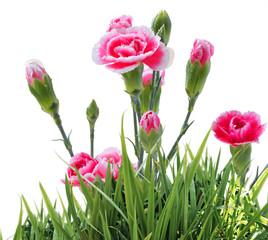 Beautiful Floral