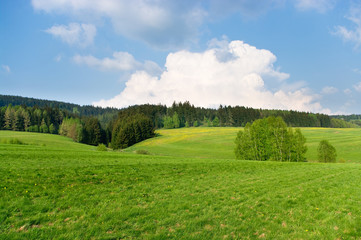 Spring landscape near the forest