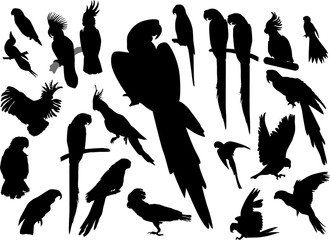 black isolated parrots collection