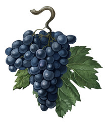 Black grapes with a leaf