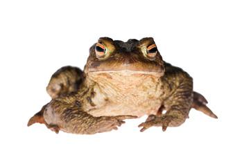 dark frog gaze