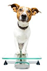 Dog on scale