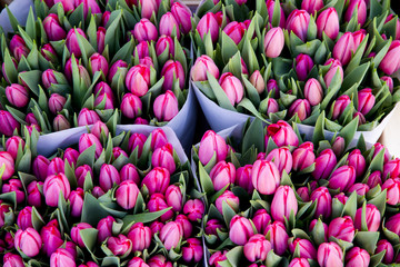 colorful tulips closeup on sale in Amsterdam flower market
