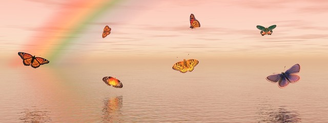 Butterflies and rainbow