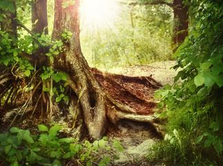 Fototapete - Misty Old Forest