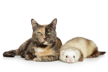 Wall Mural - Cat and ferret on a white background
