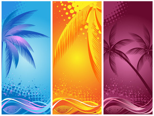 tropical palm, background summer