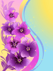 hibiscus flowers. illustration, vector