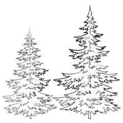 Fur-tree, contours