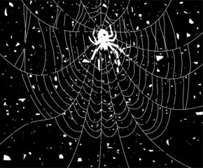 vector grungy illustration of spider and web