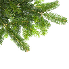 Christmas green fir tree isolated on white