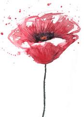 Poppy flower, watercolor