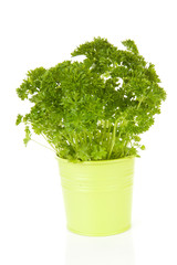 fresh parsley in bucket over white background