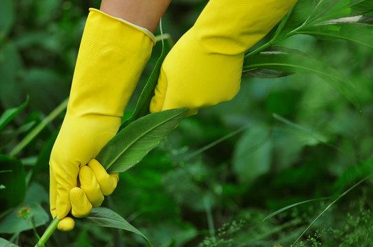 garden work wearing yellow gloves - weeding