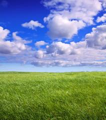 Photo sur Plexiglas Lilas Summer landscape