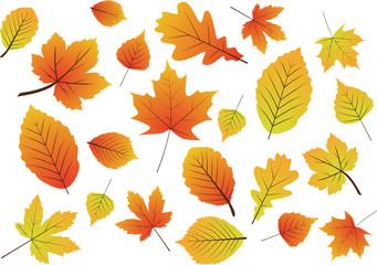 Poster Draw Herbstblätter