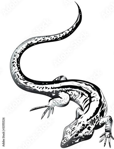 salamander tattoo vorlage stock image and royalty free vector files on pic 33115526. Black Bedroom Furniture Sets. Home Design Ideas
