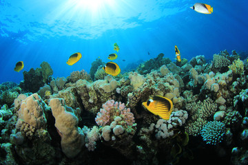 Coral and Fish (Butterlfyfish) on Tropical Reef with sun