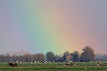 Rainbow sky over dutch farmland