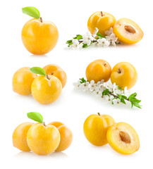 set of yellow plums images