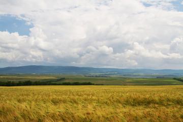 Klistermärke - Wheat field