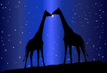 Silueta de jirafas