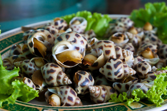 Grilled sea snail on green vgetable