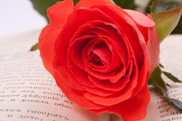 Red rose and an open book